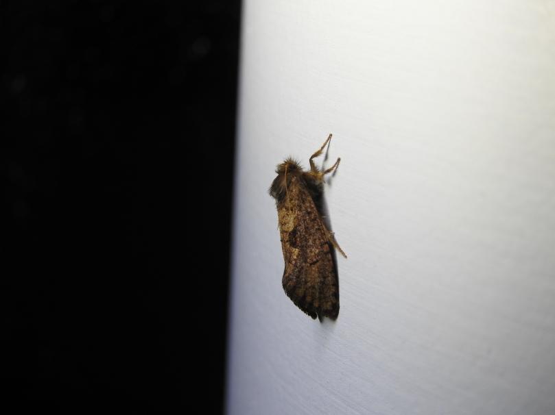 Dark Grass- Tubeworm